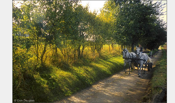 A horse-drawn wagon traverses a dirt road on the Jasmund Peninsula, Rügen, Germany.